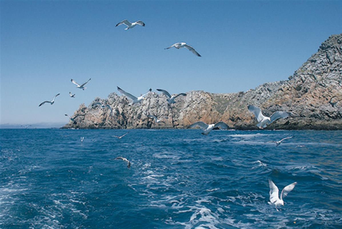 L 39 archipel des sept les et sa r serve naturelle les - Office du tourisme perros guirec bretagne ...